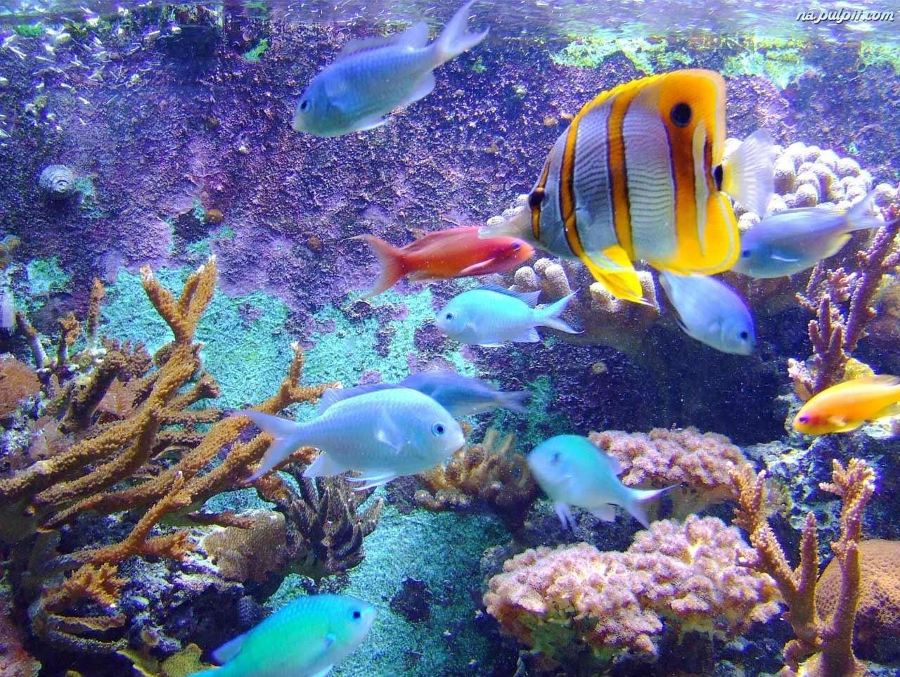 Egzotyczne ryby na pulpit for Fond ecran aquarium